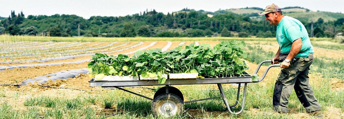 Agricoltura-slide